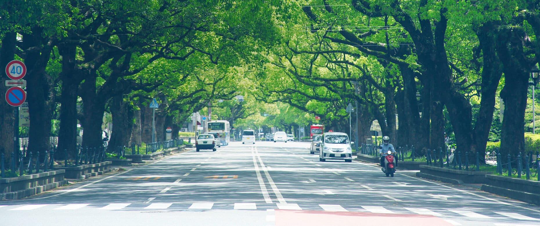 宮崎の並木道